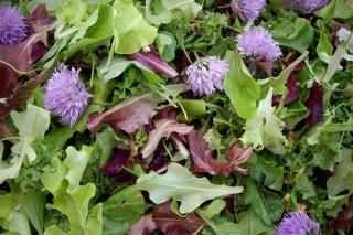 Receta de ensalada de verduras de hojas verdes