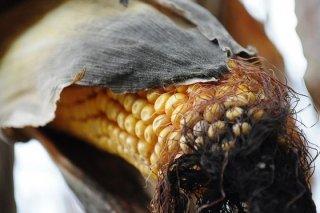 Receta de mazorca de maíz asada