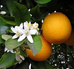 Receta de naranjas rellenas