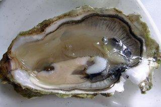 Receta de ostras calientes al azafrán