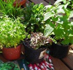 Receta de salsa de hierbas para espárragos