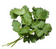 Receta de salsa de atún al cilantro